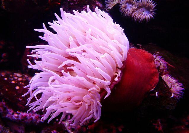 Kendilerini dibe veya dibinde yatan taşlara ve kabuklara bağlayan deniz anemonları, ya da başka adıyla deniz çiçekleri rüzgardaki çiçekler gibi yaprakları nı zarif bir şekilde sallar