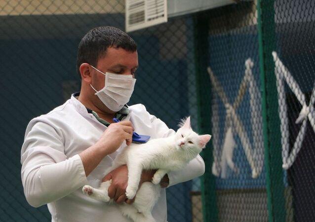 """""""Daha önce ziyaretçiler, kedilerle temas edebiliyordu, sevebiliyordu. Ama biz yeni süreçte aşı ve tedavi netleşene kadar hayvanlarla teması kaldıracağız. Ziyaretçiler, pandemi kuralları ve sosyal mesafe kuralları çerçevesinde ziyaret yapabilecekler ama hayvanlarla temas olmayacak. Hayvanlarla en az 1.5 metre mesafede durabilecekler. Bizde bu kurallar çerçevesinde normalleşmeye çalışıyoruz. Henüz açılmadık ama en kısa sürede bu kurallar çerçevesinde açmayı düşünüyoruz."""""""