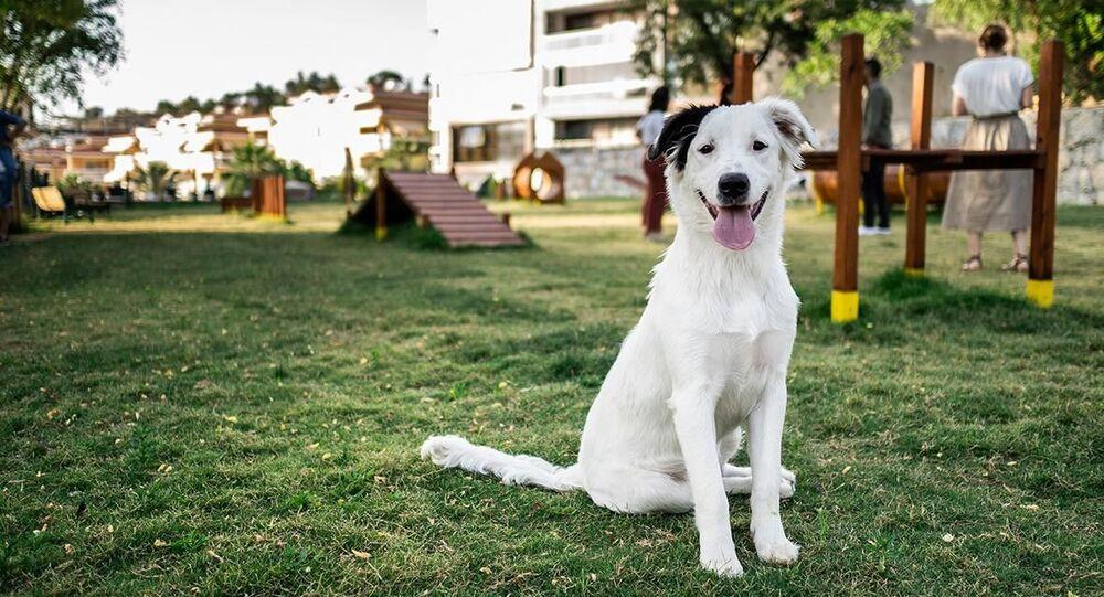 Hayvan dostu politikalarıyla ülke genelinde adından söz ettiren Kuşadası Belediyesi, evcil hayvanlar için daha sağlıklı yaşam alanları oluşturmaya devam ediyor.