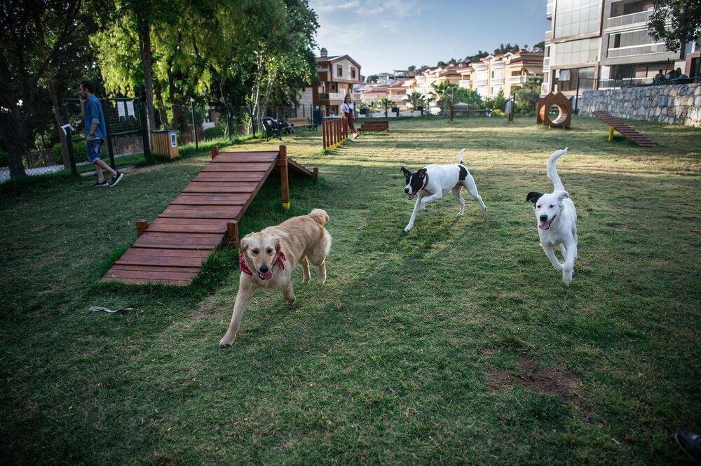 Köpeklerin parklara girişinin yasaklanmasının ardından hayvanseverlerden gelen talep üzerine Kuşadası Belediye Başkanı Ömer Günel'in talimatı ile harekete geçen Park ve Bahçeler Müdürlüğü ekipleri, sadık dostlar için parktaki her detayı düşündü.