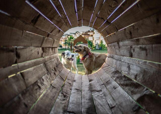Zemini doğal çim ile kaplanan ve toplam 650 metrekarelik alan üzerine inşa edilen parkta, 12 adet köpek oyun ünitesi, 5 adet bank ve hayvanların su içmesi için 2 tane de suluk bulunuyor. Park bu özellikleriyle, Türkiye'deki ender örneklerden bir tanesi.