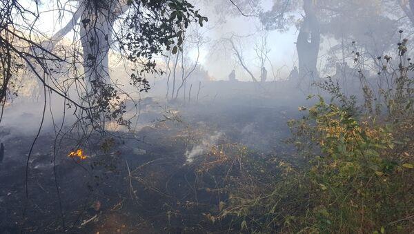 Antalya, Kumluca, orman yangını - Sputnik Türkiye