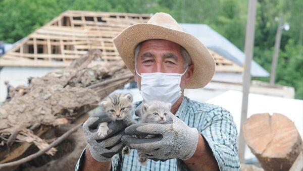 Bingöl'deki depremden 5 gün sonra 2 kedi yavrusu enkazdan sağ çıkarıldı - Sputnik Türkiye