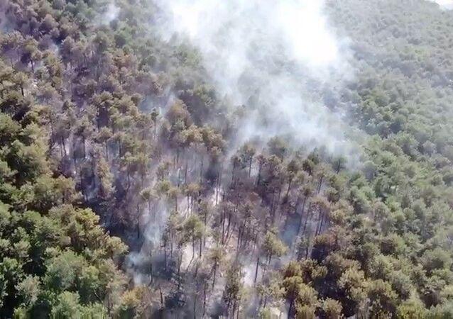Maltepe Kayışdağı Ormanı'nda çıkan yangın, itfaiye ekiplerinin müdahalesi sonucu kontrol altına alındı.