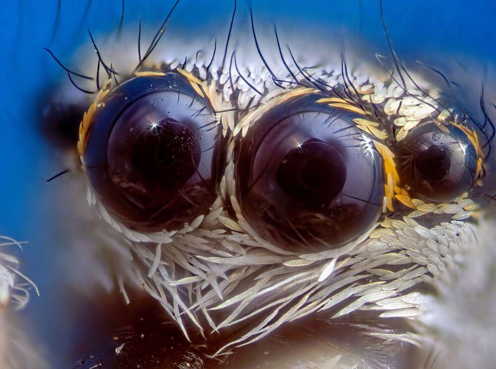 2020 Bilim Fotoğrafları Yarışmasının Doğa kategorisinde birinci seçilen 'Bir Örümceğin Optik Sistemi' çalışması