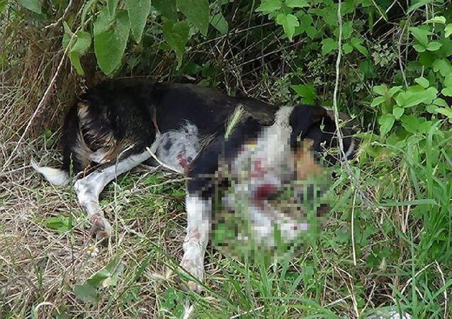 Sokak köpeğini av tüfeğiyle vurdular