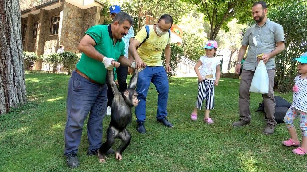 Yeni normalle birlikte Can da ziyaretçileri ile buluştu. Hayvanat bahçesinin yeşil alanlarında bakıcısı Nedim Aslan ile birlikte gönlünce oynayan şempanze, daha sonra ziyaretçileri ile bol bol fotoğraf çektirdi.