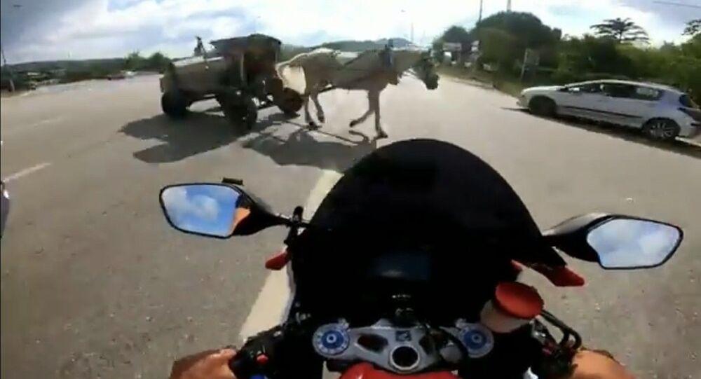 Süratli şekilde seyreden motosiklet sürücüsü ata çarptı
