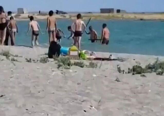 Fotoğraf için fok balığını dövdüler